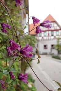 """""""Ein Dorf im Clematisfieber"""" - öffentliche Führung"""
